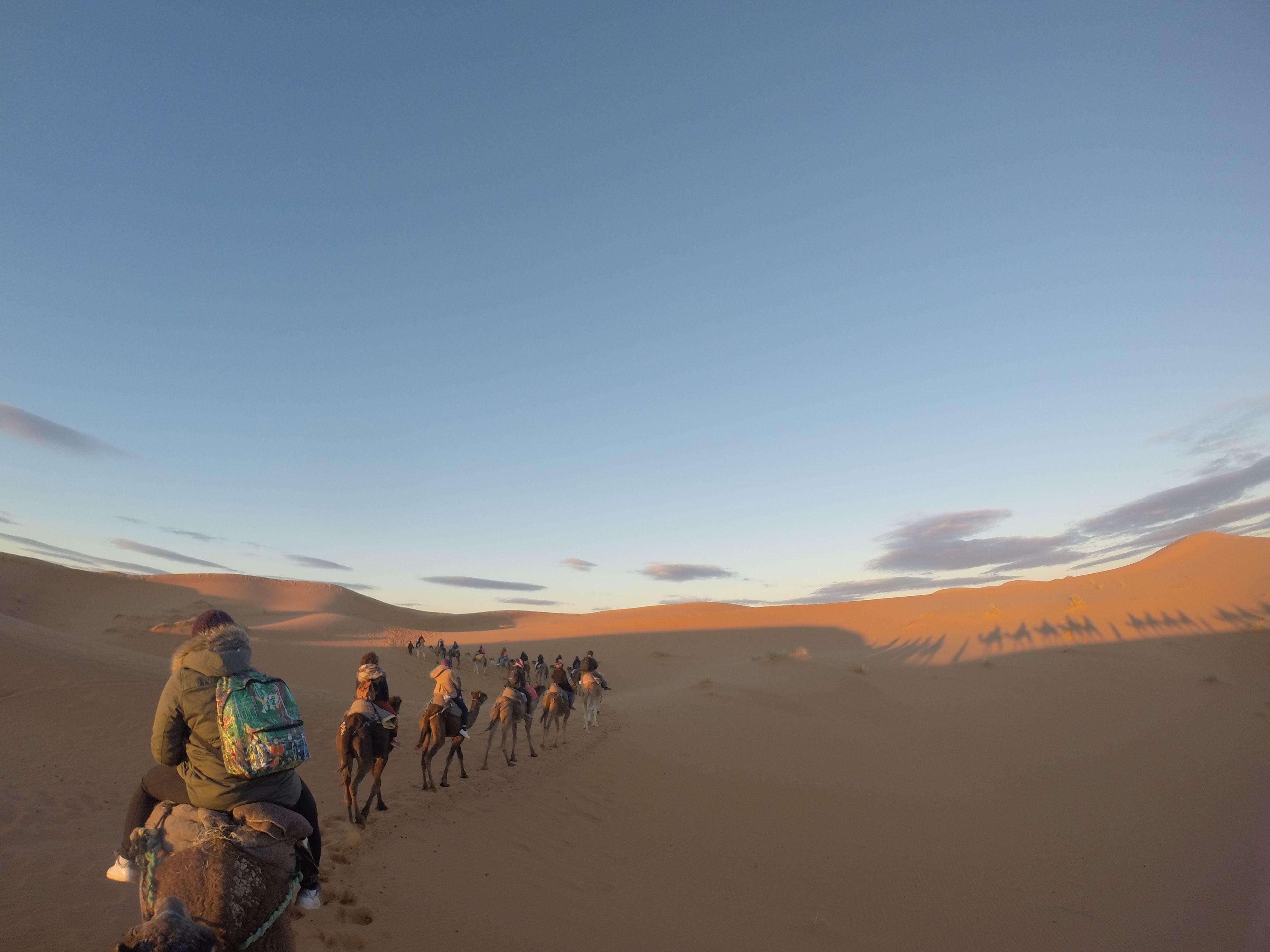 marruecos.desierto.camellos