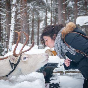 Auroras Boreales en Laponia, renos