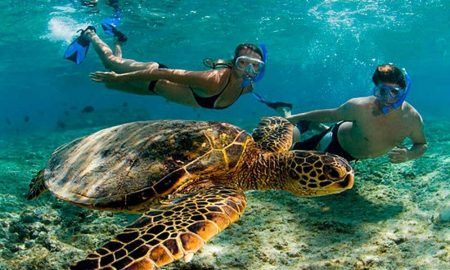 Foto buceando con tortugas