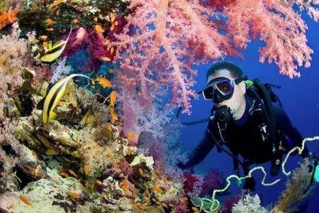 foto de viaje de fin de carrera baratos haciendo submarinismo