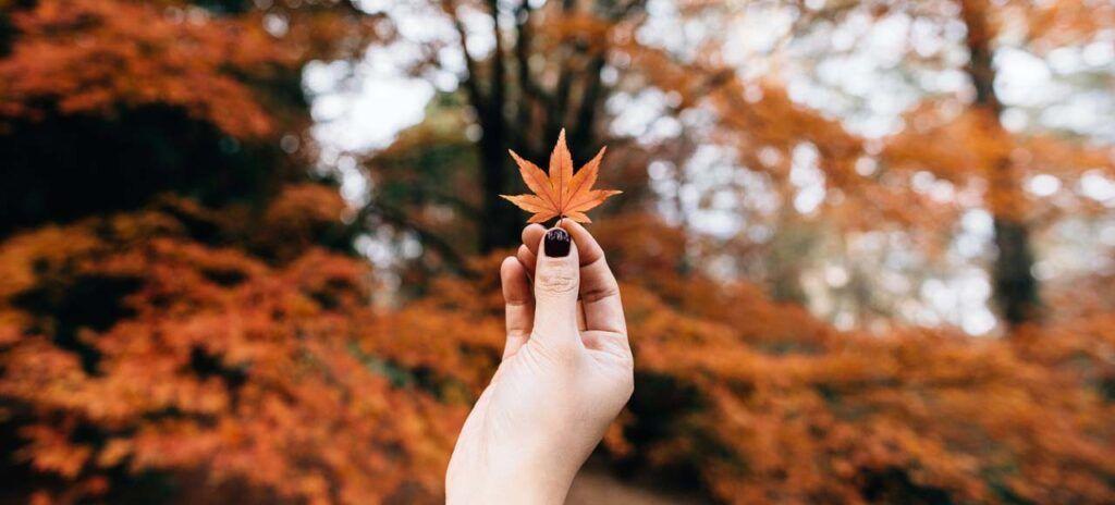 recuerdos de viaje hojas