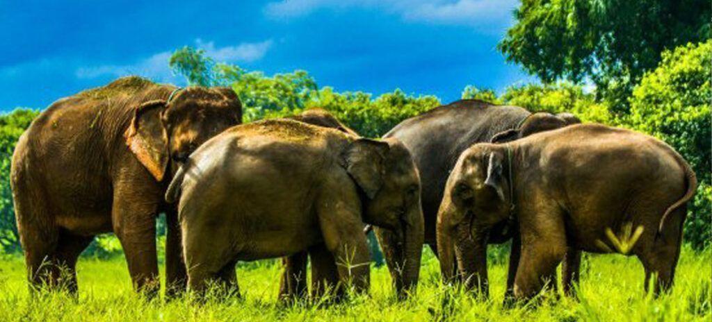 tailandia santuario elefantes