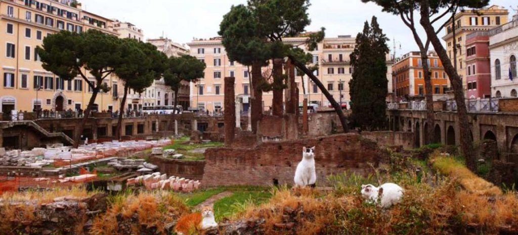 Italia Roma Largo di Torre Argentina gatos