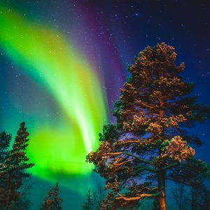 Fantásticos bosques nevados en Finlandia para ver las auroras boreales