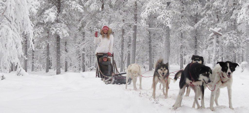 Descubre Laponia y haz un viaje en trineo acompañado de los huskies