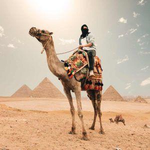 Egipto pirámide camello
